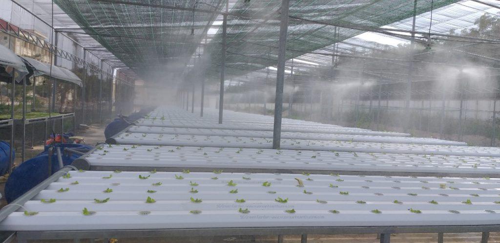 hệ thống phun sương rau thủy canh